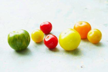 Multicolored tomatoes