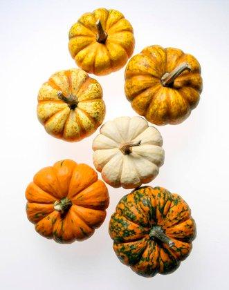 gourds_kiyoshi_togashi