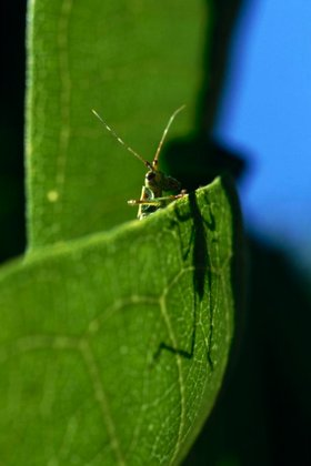 katydid and shadow on leaf