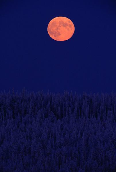 total eclipse of the moon | Indigo jones